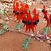 Fabaceae>Swainsona formosa Sturt's Desert Pea DSCF4492