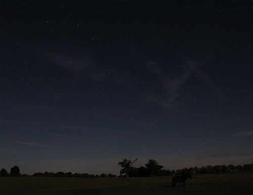 Nightsky & Horses Aug.15 2011