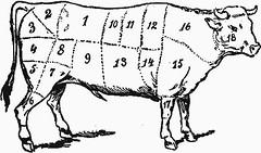 cow-anatomy.gif