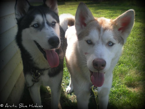 Embry, Zoey & Ares's Scrapbook! Updated *12.10* 6057507728_1a31057905