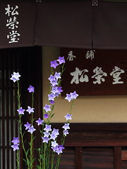 Classic Kyoto (Teruhide Tomori) Tags: old travel house flower classic japan shop architecture canon store kyoto traditional   woodenhouse incense balloonflower