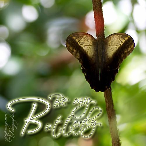 Fotografie: Be my Butterfly