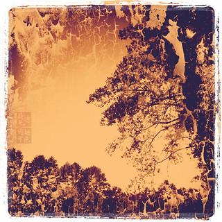 Limits of Treeness II