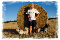 Two dogs and their man (Linda Cronin) Tags: blue summer sky max dogs field gold border harvest straw crop round spaniel cockerspaniel bale gromit crossbreed challengeyouwinner friendlychallenges
