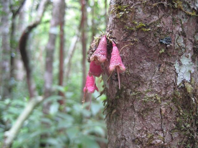 То ли дерево цветет, то ли эпифит