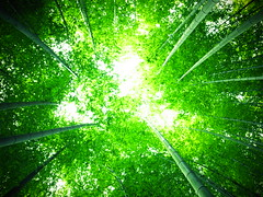 [Free Image] Nature / Landscape, Forest, Bamboo, Green, 201108252300