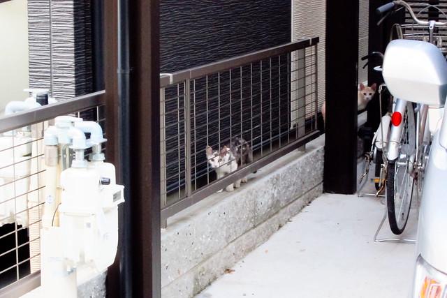 Today's Cat@2011-08-24