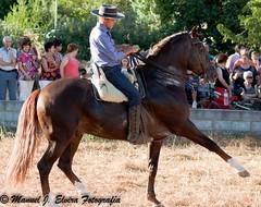 Doma de caballo (Nolete de Frailes) Tags: horse caballo feria frailes