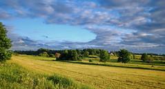 DSC_1031j (Bargais) Tags: blue summer cloud tree green nature field yellow landscape natural country meadow latvia lithuania vasara lietuva latvija daba grieze