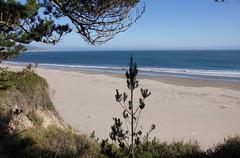 2011-08-13 Kalifornien, Pazifikküste 062 Ano Nuevo State Reserve
