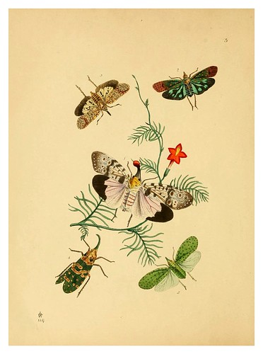 020-The cabinet of oriental entomology…1848- John Obadiah Westwood