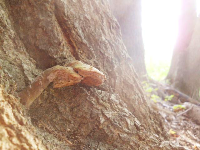 forestdreams 003