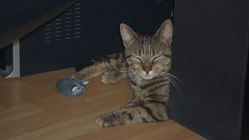 Hamlet and his favourite mouse