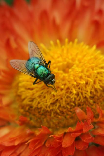 IMAGE: http://farm7.static.flickr.com/6089/6113770011_deb0281e1e_z.jpg