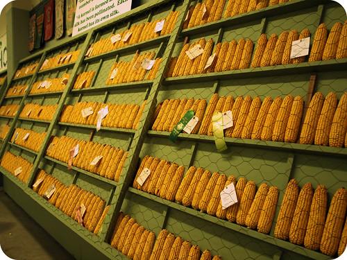 fair corn