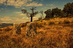 The dry tree (Eduardo Estllez) Tags: paisajes naturaleza tree nature photoshop contraluz landscape photography landscapes photo foto photographer natural background paisaje fotografia fondo fotografo vegetacion extremadura caceres zarzadegranadilla valledelambroz vetonia eduardocagney eduardoestellez mygearandme estellez ringexcellence blinkagain thedrytree