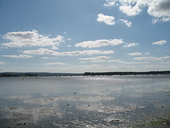 Poole Harbour & Sandbanks Area