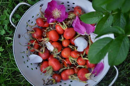 kibuvitsamarjad/rosehip