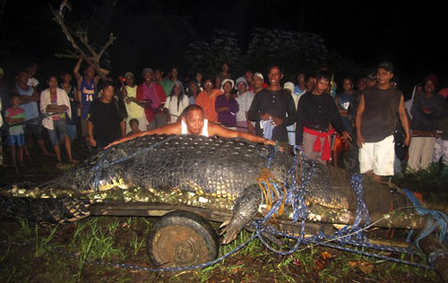 biggest-crocodile-captured