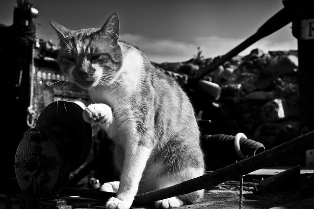boat yard cat with colour in comments