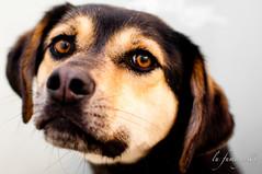 menino (LuFumagalli) Tags: dog cao cachorro caes petadoption abandonada streetdog cachorroderua 2011 adoptdogs adocao lufumagalli adocaodecaes resgatadodasruas emabrigo