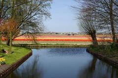 Southern Tour (WWW.CYCLETOURS.COM) Tags: flowers cycling tulips denhaag barge keukenhof readyforspring visitholland historicalholland