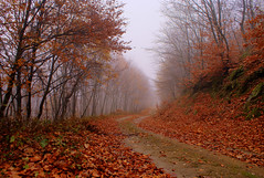 Fall Road   [Explored] (nikolaos p.) Tags: autumn fall colors fallcolors outdoors landscape landscapes trees forest forests wow1 red greece halkidiki chalkidiki holomon poligiros polygyros taxiarhis taxiarchis               road roads nature mygearandme mygearandmepremium mygearandmebronze mygearandmesilver mygearandmegold mygearandmeplatinum mygearandmediamond 100commentgroup