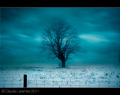 Lonely tree (claude larame) Tags: wow1 naturepoetry fleursetpaysages lelitedespaysages