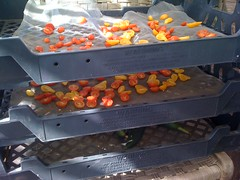 Sun Drying Tomatoes by mikeysklar