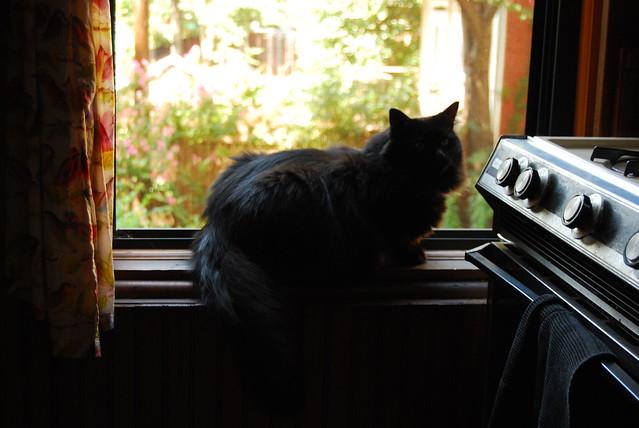 Kitty in kitchen window.