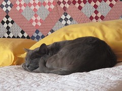 Don't disturb (manu/manuela) Tags: camera home cat bed chat quilt room pixel quilting quilted lit patchwork chambre gatto myhome letto chezmoi mamaison miacasa quiltmain