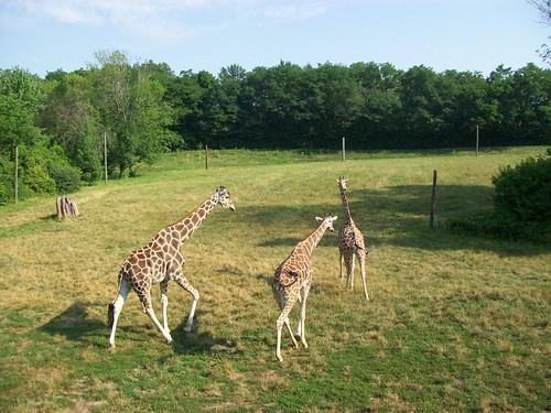 Zoo - 7-17-11 023