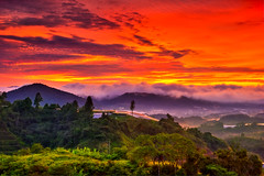 The Morning Light (ZawWai09) Tags: travel mountains clouds garden highlands asia southeastasia tea dramatic tranquility cameron valley malaysia kualalumpur cameronhighlands ipoh tranquil hdr pahang teaplantation brinchang teaestate teagardens bohteaestate asiapacific bohtea mountbrinchang gunungbrinchang sungaipalasteaestate sunriselandscape sungeipalas sgpalasteaplantation bharatteaplantation bharattea sungeipalasteaplantation tanahratasgpalas