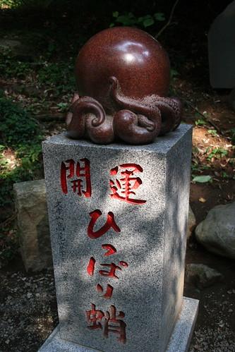 Octopus-root cedar tree marker