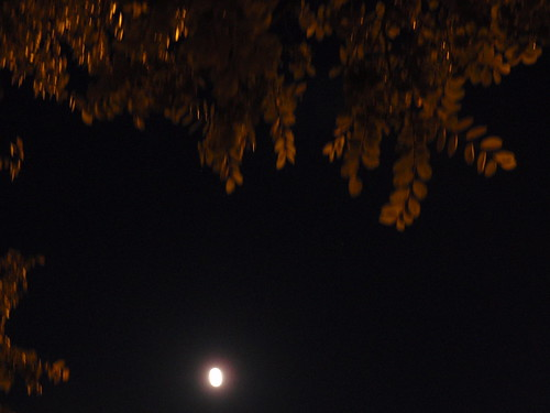 Full Moon with Leaves