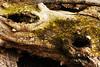 Les yeux du bois (Pierre Kubes) Tags: lake tree water eau lac bretagne contraste hood cote pecheur foret arbre barrage hdr ponton darmor guerlédan