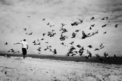 Birds (Annie Hall Photography) Tags: blackandwhite beach birds goletabeach anniehall serend1p1tyx