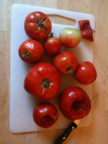 Tomatoes from the backyard garden