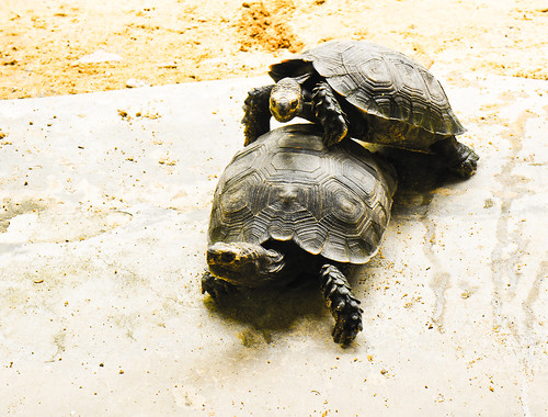 Crocodile Farm :: Turtle
