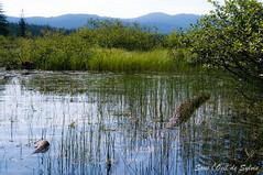 (Sous l'Oeil de Sylvie) Tags: morning lake reflection nature water montagne eau pentax lac paysage reflets herbe matin k7 sousloeildesylvie rservedeslaurentides