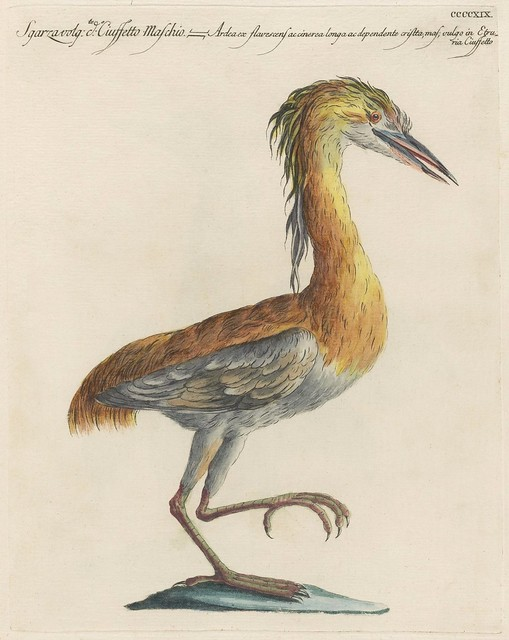 18th c engraving of bedraggled orange-haired heron standing on 1 leg