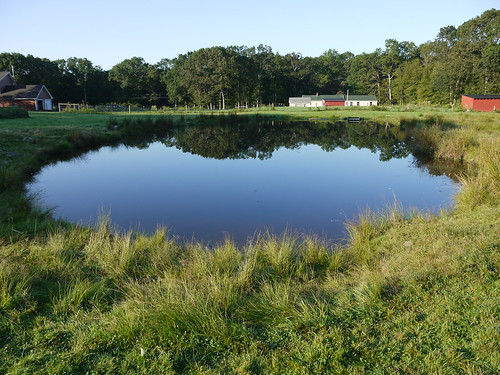 Our full pond in August!
