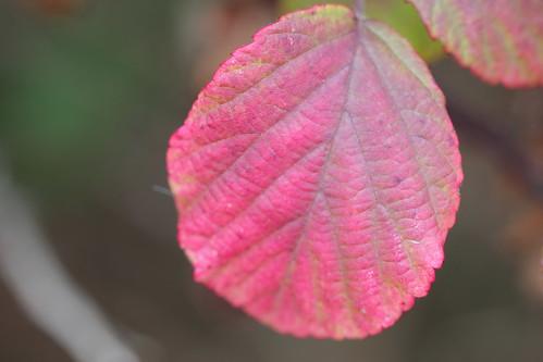 naturally pink