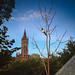 University magpie
