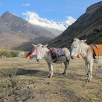 "Mules/Donkeys <a style=""margin-left:10px; font-size:0.8em;"" href=""http://www.flickr.com/photos/14315427@N00/6079482649/"" target=""_blank"">@flickr</a>"