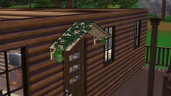 Sheltering Ivy
