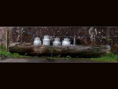 Milchtansen mit Wasserkhlung (steffi's) Tags: schweiz switzerland milk suisse brunnen farming landwirtschaft svizzera alp kse ch milch watertrough tansen milkchurns murg murgbach berggebiet holztrog murgsee woodentrough milchtansen