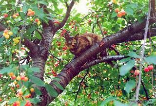 Tiinakirsikkapuussa1 by Anna Amnell
