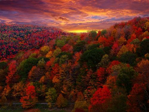 [フリー画像] 自然・風景, 山, 森林, 紅葉, 201108291900