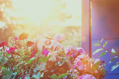 play a better version (laura zalenga) Tags: flowers light sun nature face self colorful hand bright bokeh sleep balcony small enjoy laurazalenga